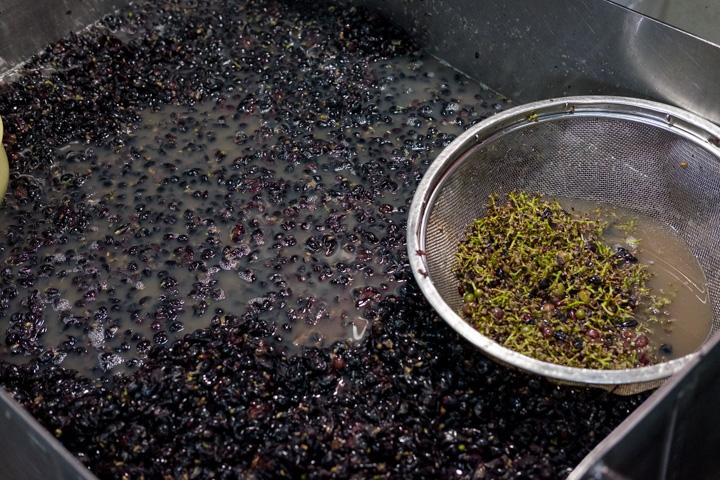 茎を取り除く:シャルマンワイン